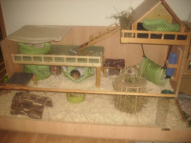 Fab Cavy Cage