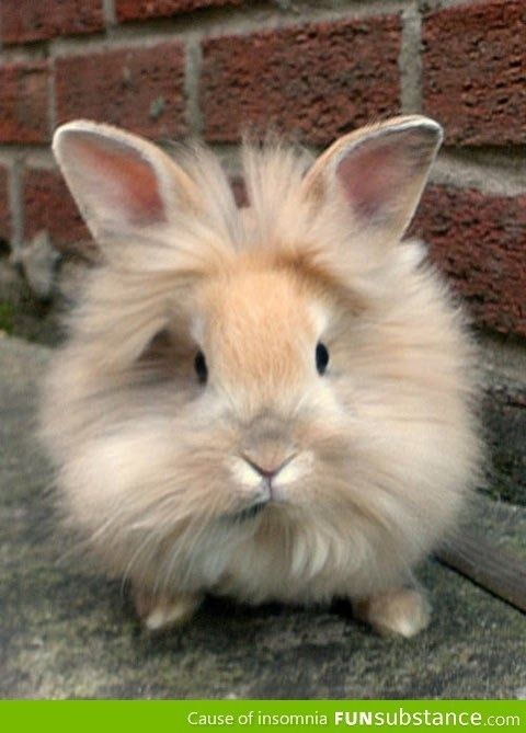 Lionhead Bunny by brucee