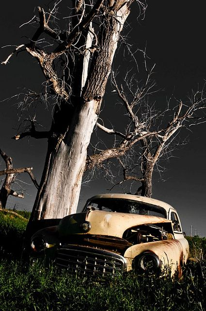 Car - Looks like a Cottonwood Tree to me ... Could this be New Mexico... Nawww