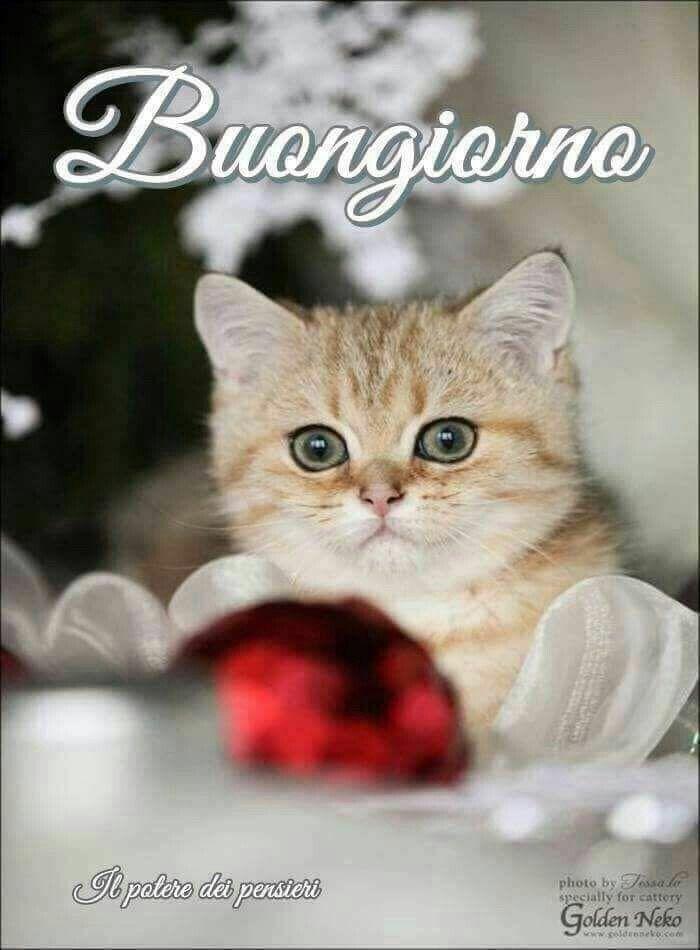 Buongiorno Saluturi It Pinterest Facebook