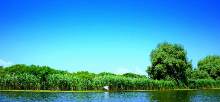 pelican in delta