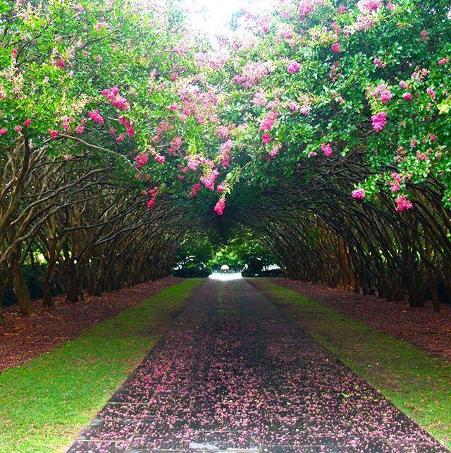 Dallas Arboretum And Botanical Garden 15 Daily 9 5 Dallas