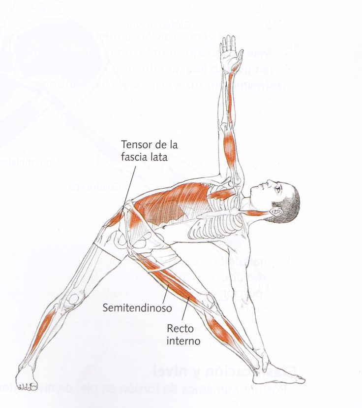 85 best ANATOMIA YOGA images on Pinterest | Human body, Physical ...