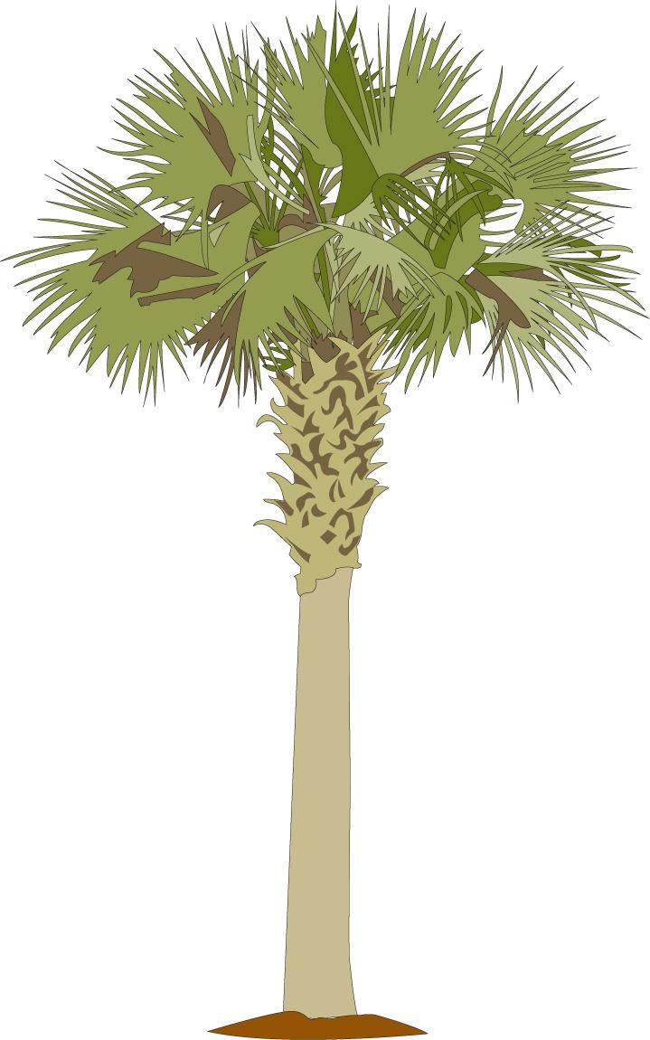 Palmetto-tree.png 719×1,150 pixels