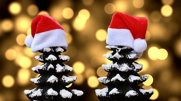 Kerstmis, Sparren, Sneeuw, Bomen