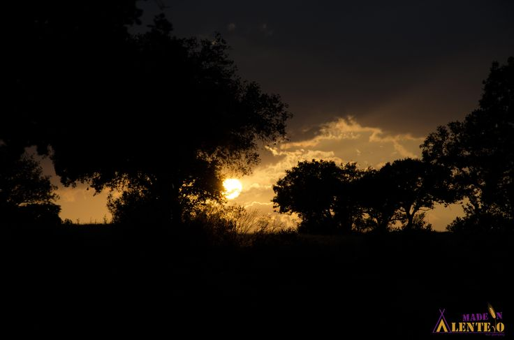 Holm Oak sunset.  #MadeInAlentejo #Glamping #Oak #Sunset #Mertola