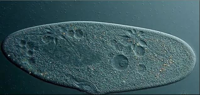 Microscope Top 10 Images Of The Year (10)