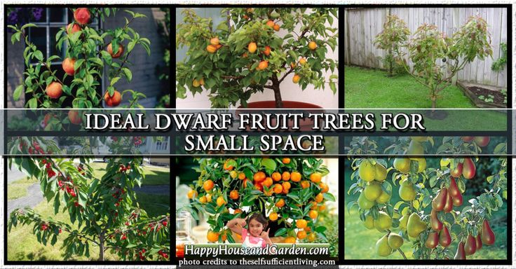 Ideal Dwarf Fruit Trees For Small Space Gardens