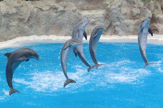 Dolphins Can 'Speak Just Like Humans' Finds New Study - http://viralfeels.com/dolphins-can-speak-just-like-humans-finds-new-study/
