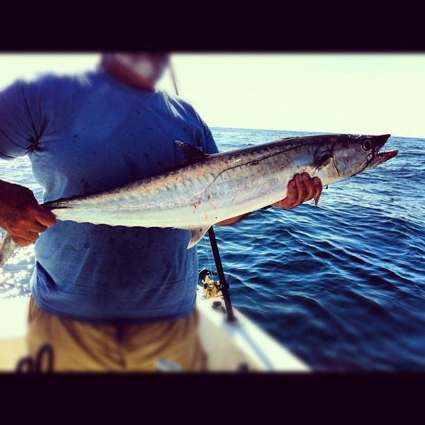 1000 images about mackerel on pinterest alabama for Deep sea fishing mobile al