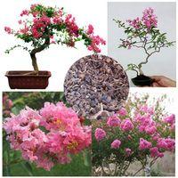 100 UNIDs быстро растущих многолетних семена цветов, семена цветов мирта бонсай / семена деревьев