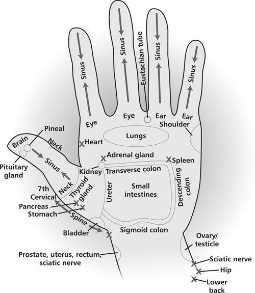 Reflexology Charts:  Hand & Foot
