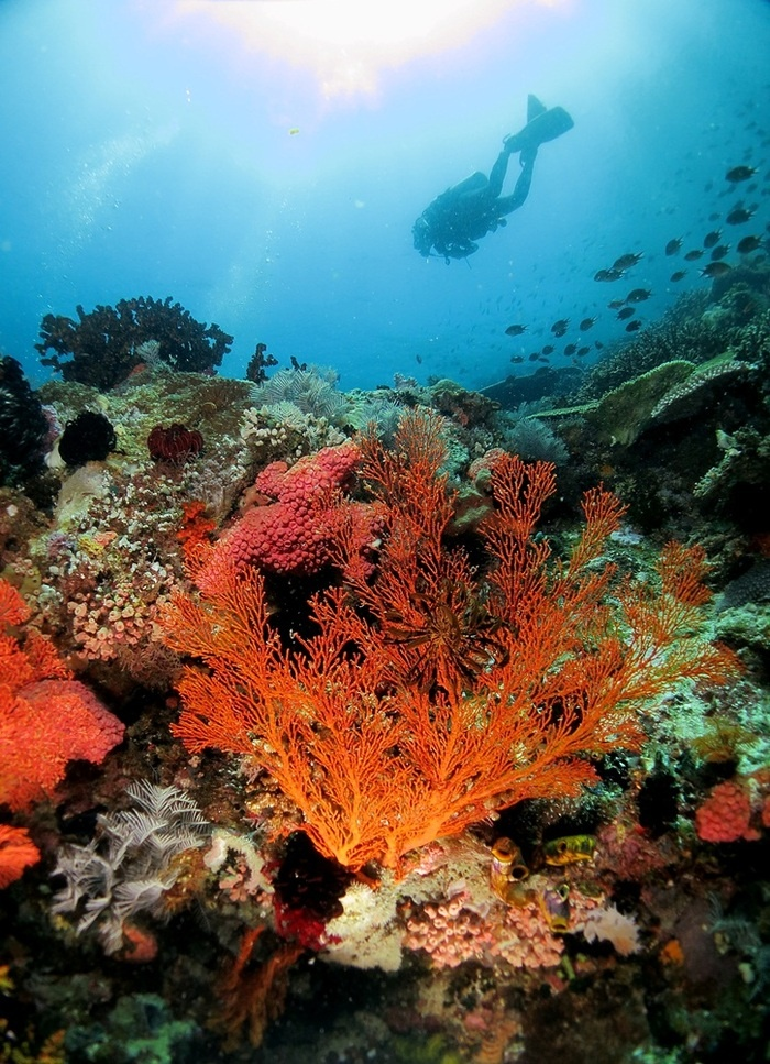 Every year, the spot is visited by international and domestic tourists who are eager to experience the waters around Komodo Island.