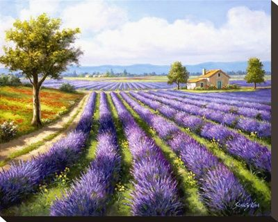 Lavender Rows by Sung Kim - Canvas Print