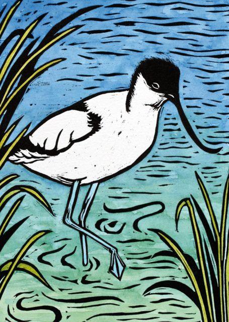 The 17 best katharine green printmaker images on pinterest art avocet by printmaker katharine green blank art cards by green pebble www m4hsunfo
