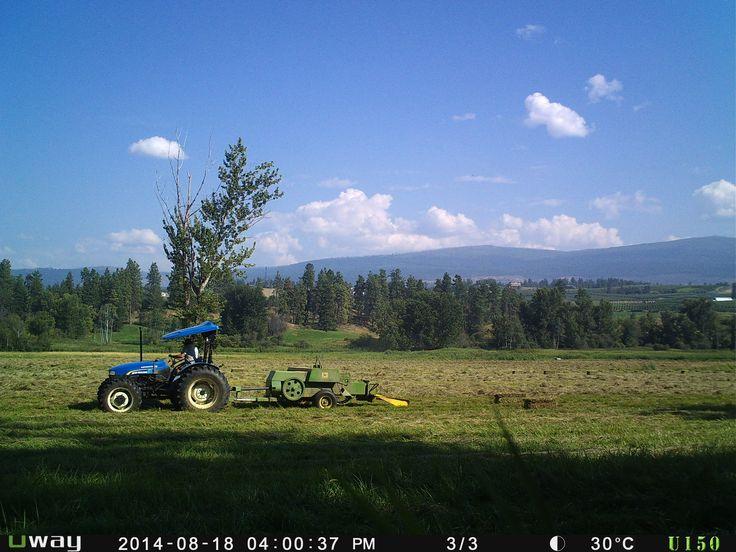 2014 hay season