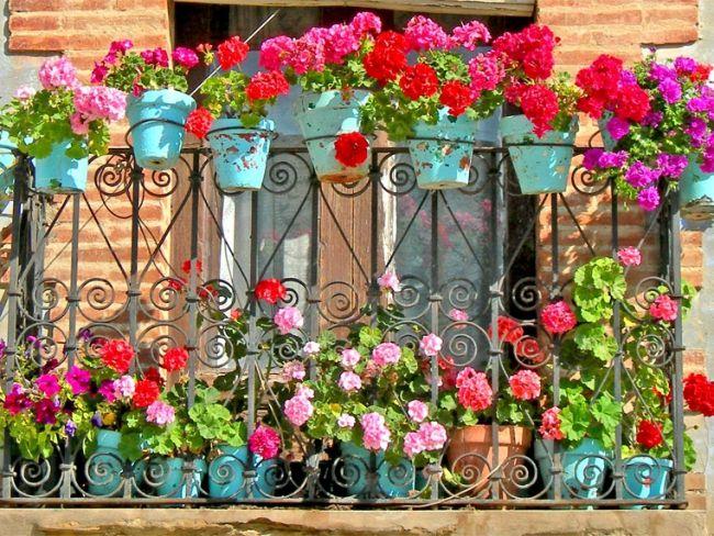 kwiaty na balkonie, balkon kwiaty, uprawa kwiatów