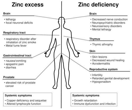 How much zinc should i take