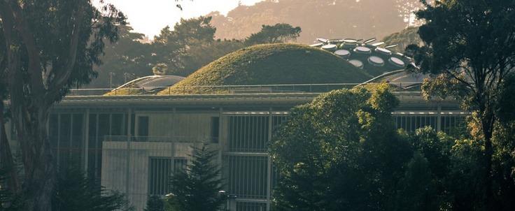 green walls,green roofs ,green everywhere!