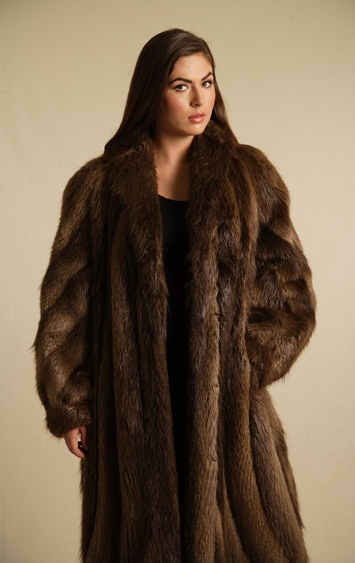 12 Best Beaver Images On Pinterest Furs Beavers And