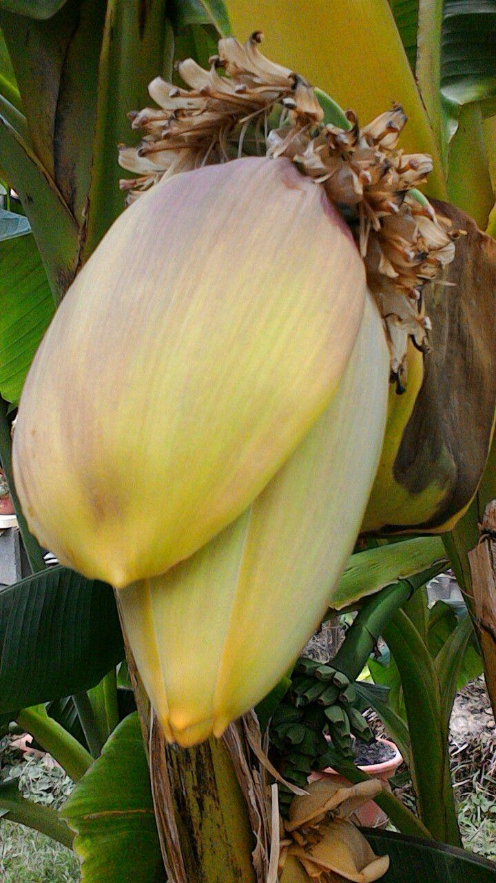 Banán lesz?