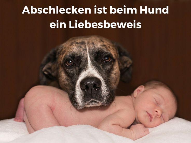 Deutsche Fotzen mgen fotze lecken