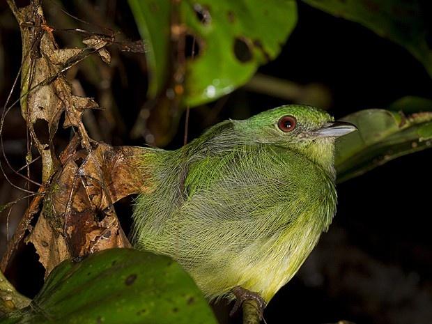 Parque da Bolívia tem maior biodiversidade mundial, diz entidade [WCS]