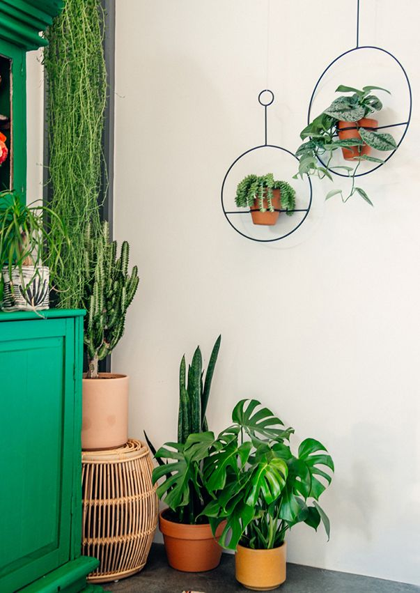 plants for boho style / justina blakeney.