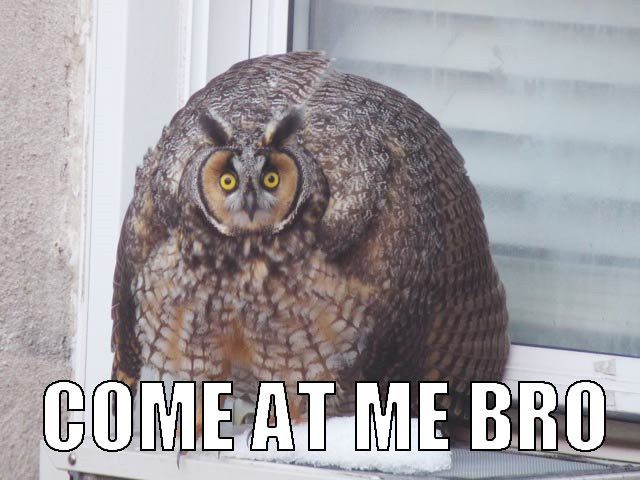 20 Hilariously Adorable Owl Memes. Im seriously obsessed with owls. TOO CUTE