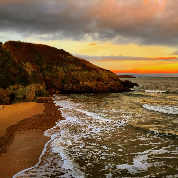 Beech sunset Wicklow Ireland
