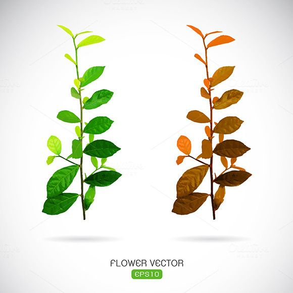 Vector image of leaves by yod67 on @creativework247