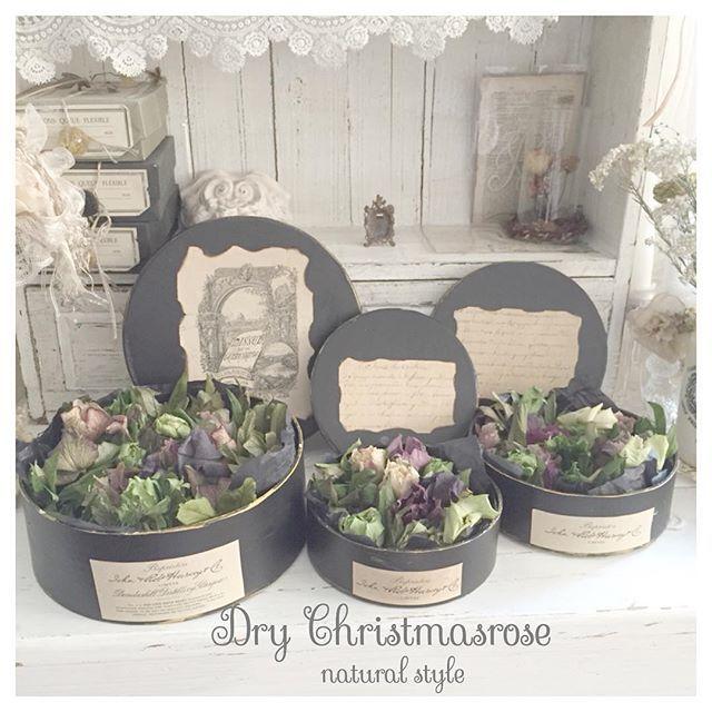 *:.*.:*:。おはよ♡。:*:.*.:*:。 * クリスマスローズのドライボックス…* * 大・中・小 3サイズ作りました❀.(*´◡`*)❀. * シングル・セミダブル・八重のクリローちゃんのドライが入ってます꒰ღ˘◡˘ற꒱✯*・☪:.。 * ドライフラワーよりボックスの方が繊細で扱いがドキドキ(笑) * * #fleurage2016 #fleurage #dryflower #Christmasrose #dryflowerbox #frenchnatural #whiteinterior #フルラージュ2016 #フルラージュ #ドライフラワー #ドライボックス#クリスマスローズ #フレンチナチュラル #ホワイトインテリア