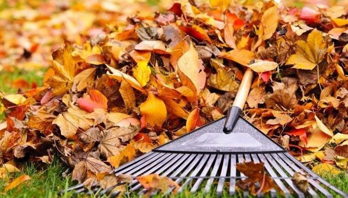 Miért fontos összegyűjteni a lehullott faleveleket? Tippek kerti zöldhulladék kezeléséhez | Életszépítők