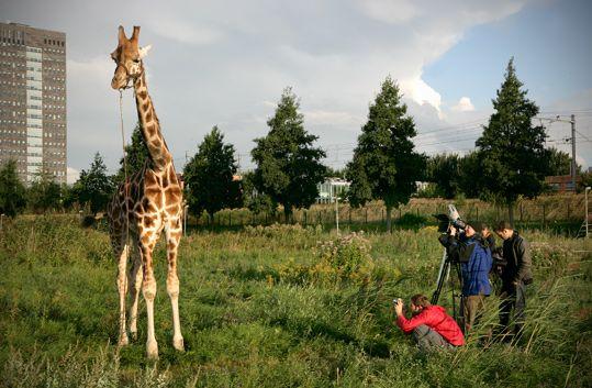 Frank Koolen filmt op SITE2F7 naast Museum De Paviljoens zijn natuurdocumentaire New Marshlands (2009). © Gert Jan van Rooij, Museum De Paviljoens