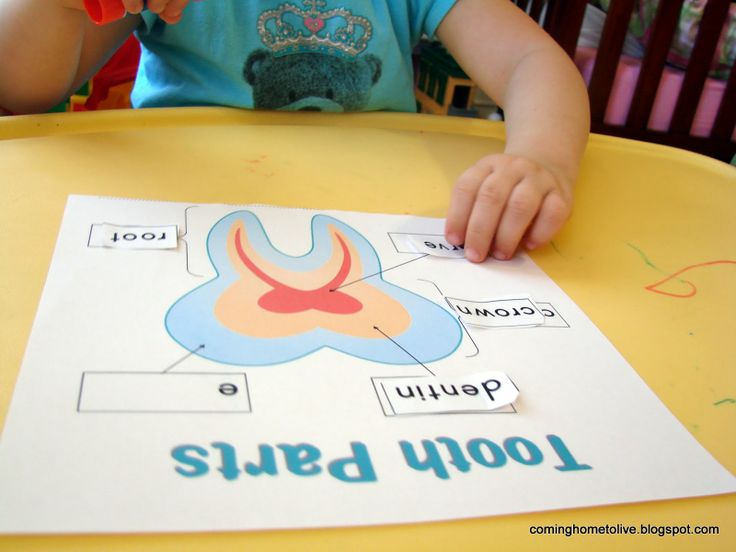 We learned about the parts of a tooth from a great Dental preschool ...