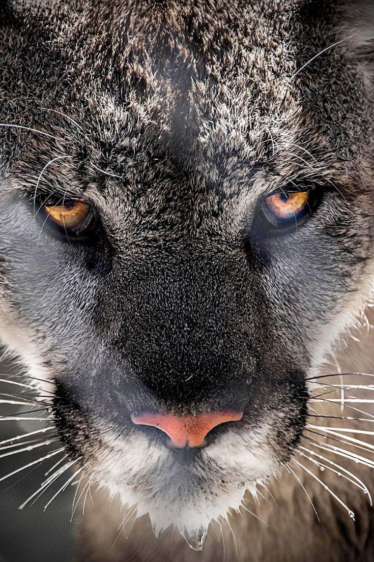 | Eyes of the Hunter | Edit by Makxveli |