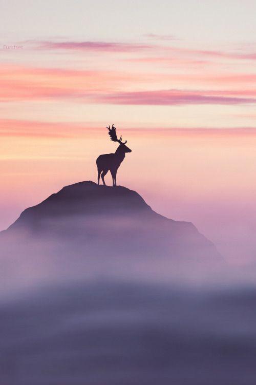 Олений пост. №2. фотография, олень, парнокопытные, Животные, Природа, лес, длиннопост