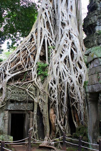 Angkor, Camboja.