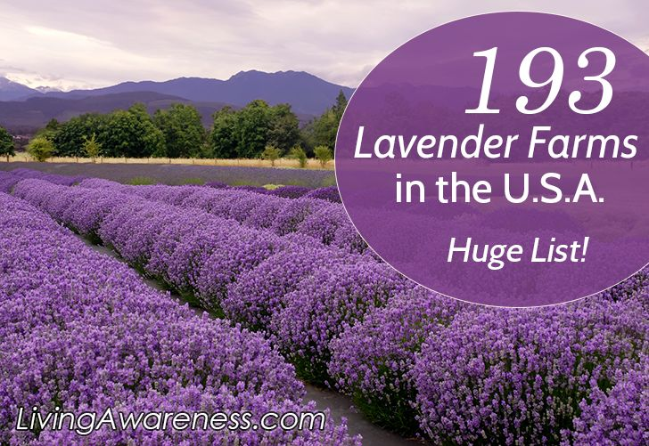 Find a lavender farm near you. Lots of mail order farms for all of your lavender crafting.