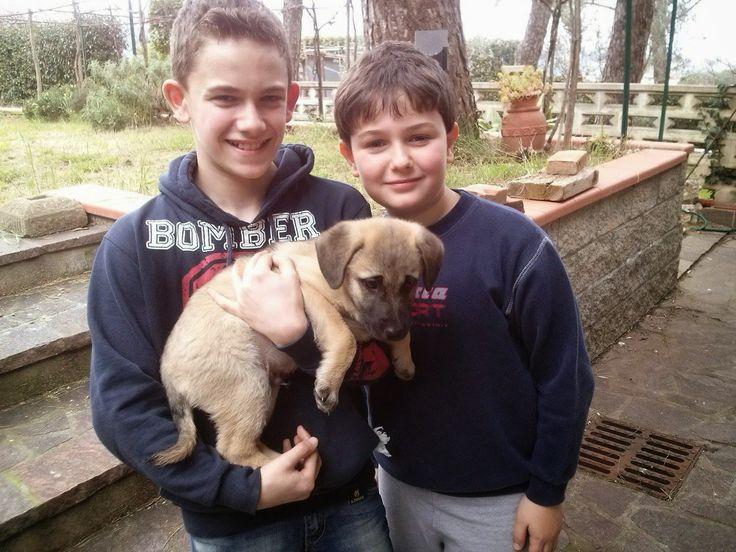 Le migliori soddisfazioni: storie di cani adottati