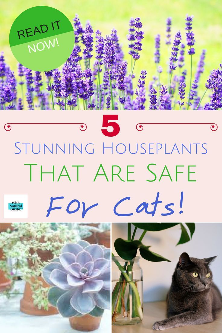 5 Low Maintenance Houseplants That Are Safe For Cats Cat Safe Plants Houseplants Decor Houseplants Safe For Cats