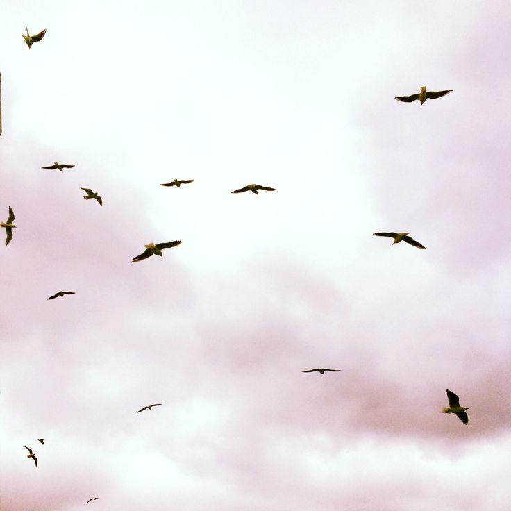 Seagulls  & Freedom