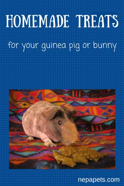 Homemade Treats for your rabbit or guinea pig