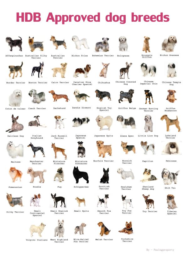 Types Of Pets Allowed In Hdb Dog Breeds List Dog Breeds Chart