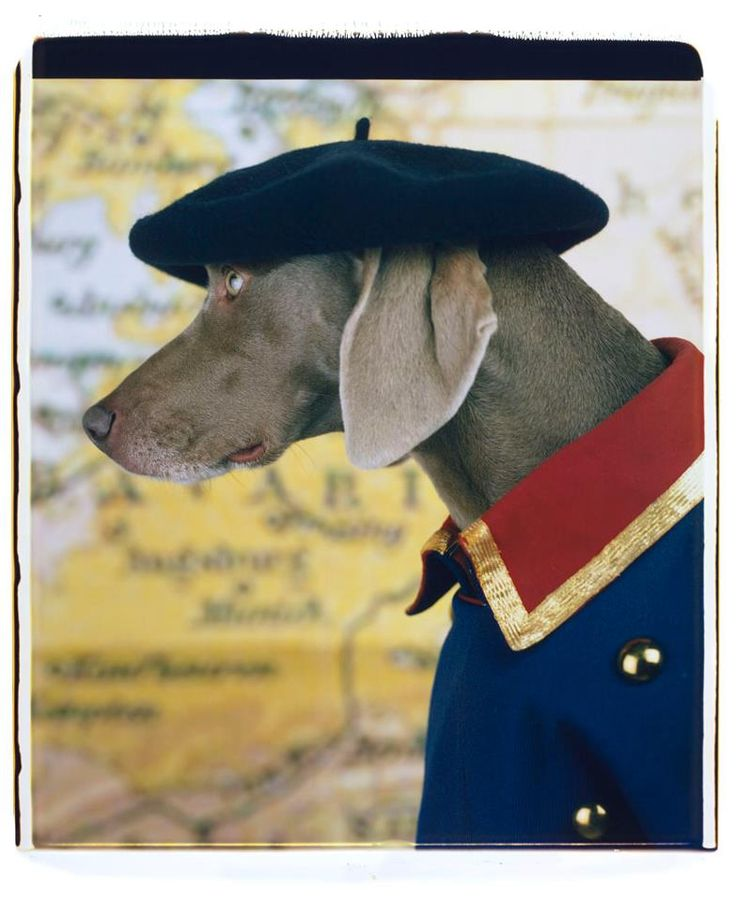 17 best images about william wegman on pinterest collage for Saccucci honda middletown