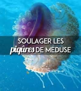 Recherche Soulager les piqures de meduses. Vues 82321.