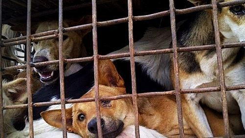 Petition · Ian Mearns – Chair, Bob Blackman, Peter Bone, Philip Hollobone, Gavin Newlands David Nuttall, Jess P: Take action against the barbaric dog meat trade! · Change.org