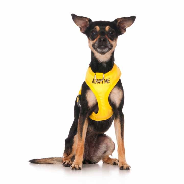 "Bright yellow ADOPT ME vest harness | Fits Max Neck 26cm (10"")  Chest 33-48cm (13-19"") 