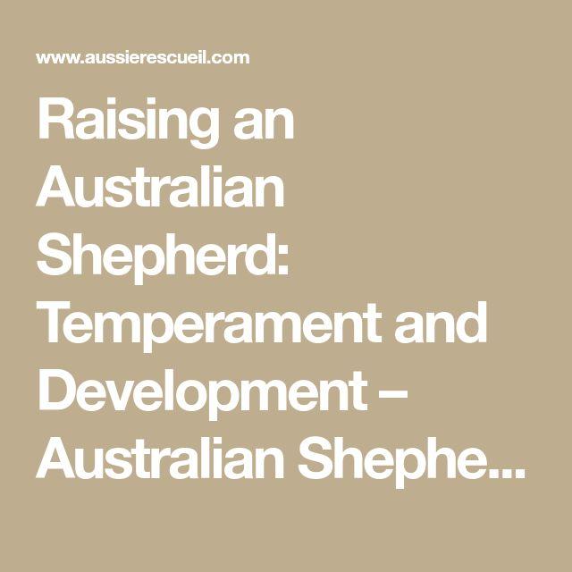 Raising an Australian Shepherd: Temperament and Development – Australian Shepherd Rescue Midwest