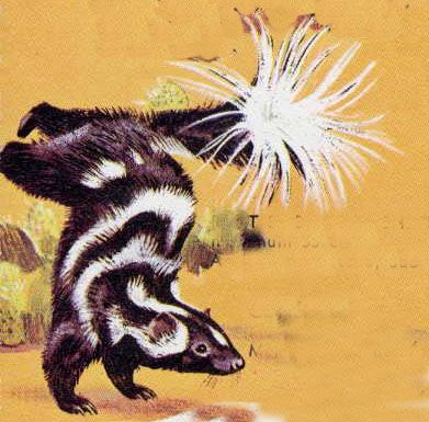 Pygmy Spotted Skunk